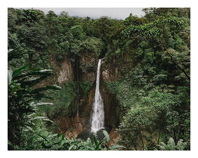 into the jungle — ☁️🌿🌱