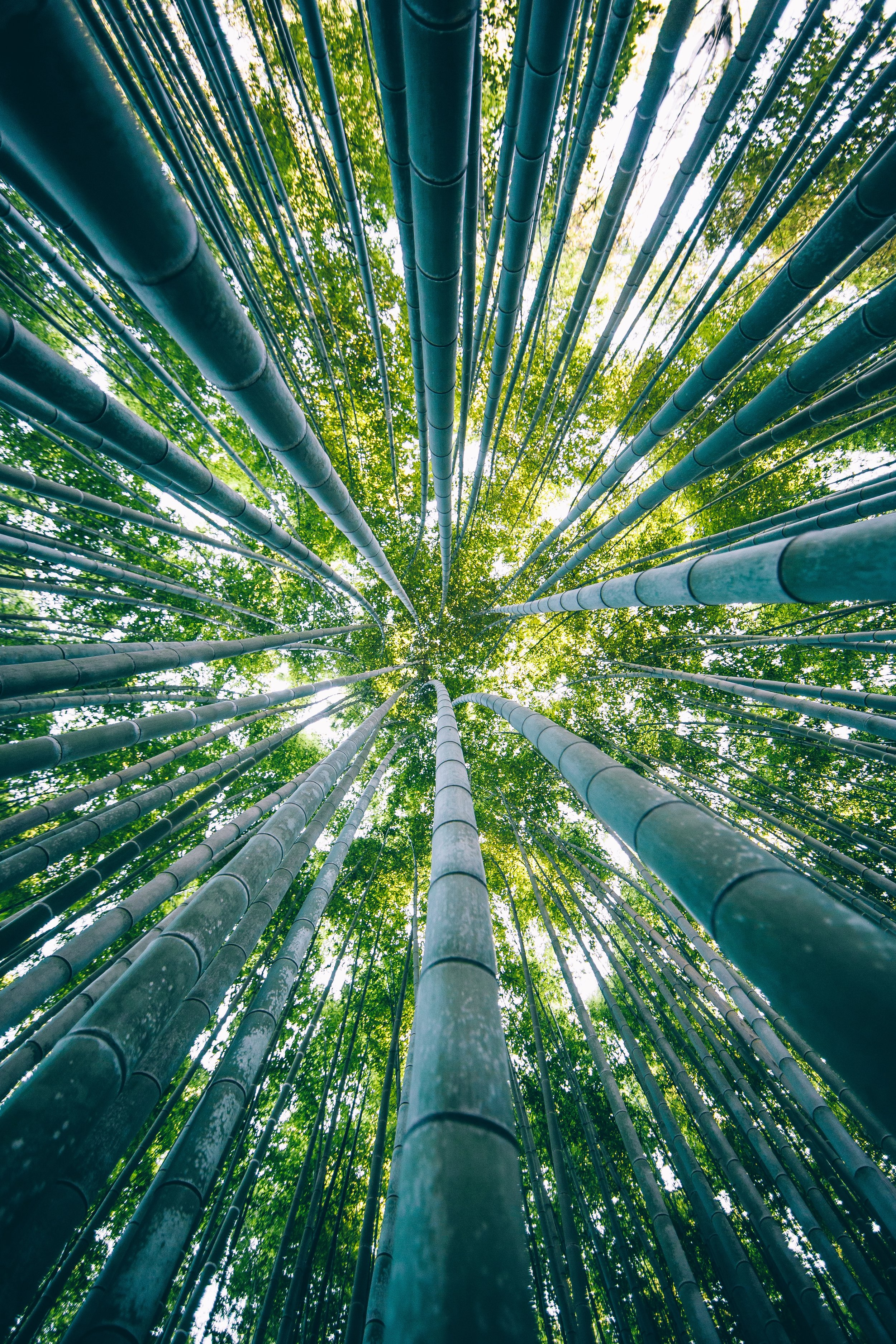 Places - japan-14.jpg