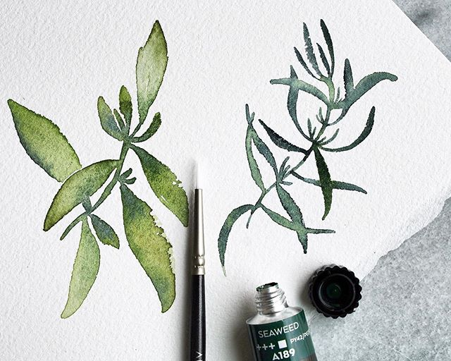 :: the movement of tiny leaves on plants :: . . Sitting still without any technology and just breathing deeply, coffee in hand, and noticing how a basil and a rosemary plant have the most delicate leaf structure. Mindfulness in painting feels so fresh🌿 . . I mixed @artezaofficial Seaweed Green gouache into my watercolors for these, which gave them such dimension✌🏽