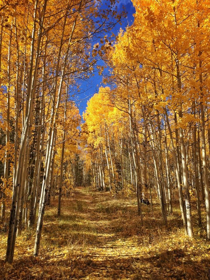 Fall colors at Kenosha Pass, Colorado