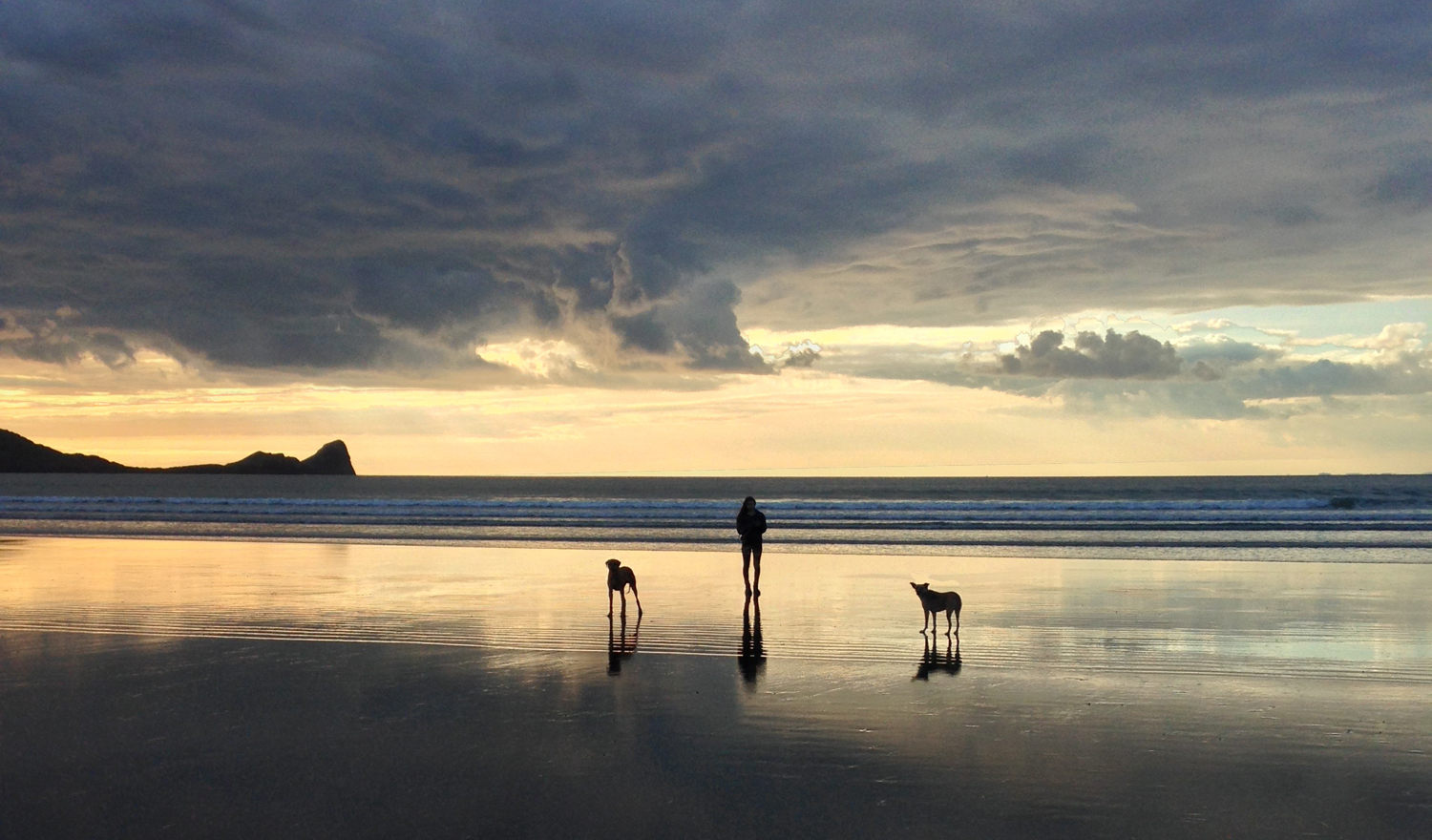 evening-in-the-beach-with-dogs.jpg