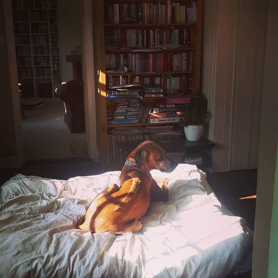 Raffi in bed