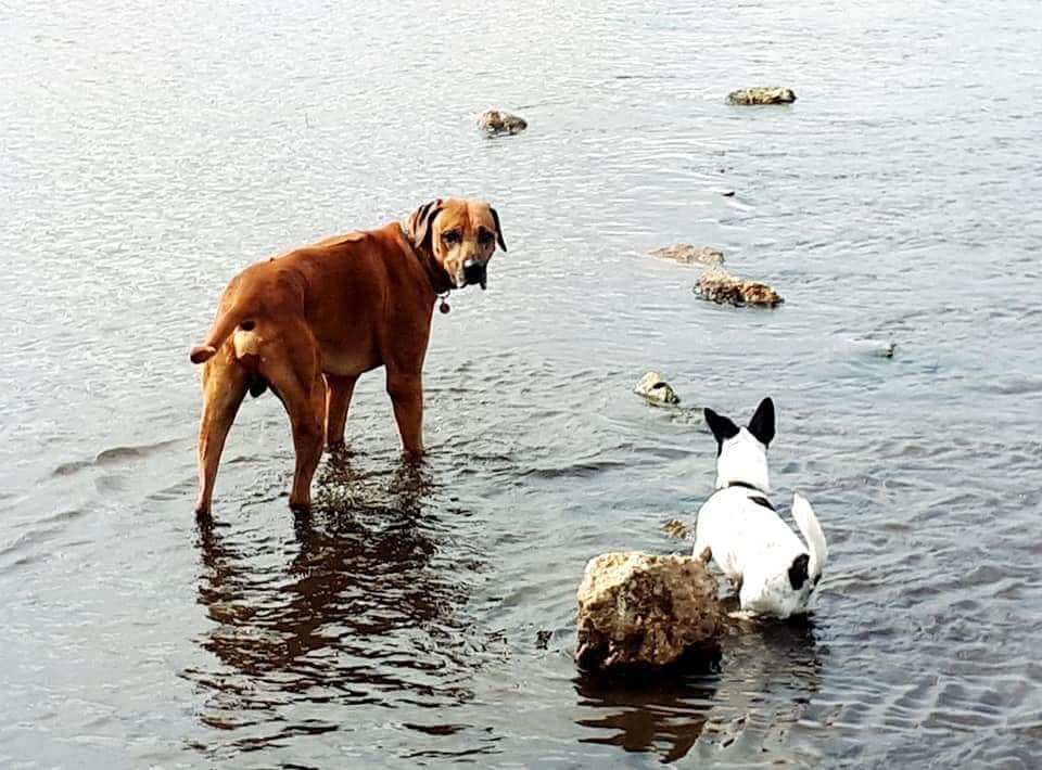 Raffi and new friend Phoebe