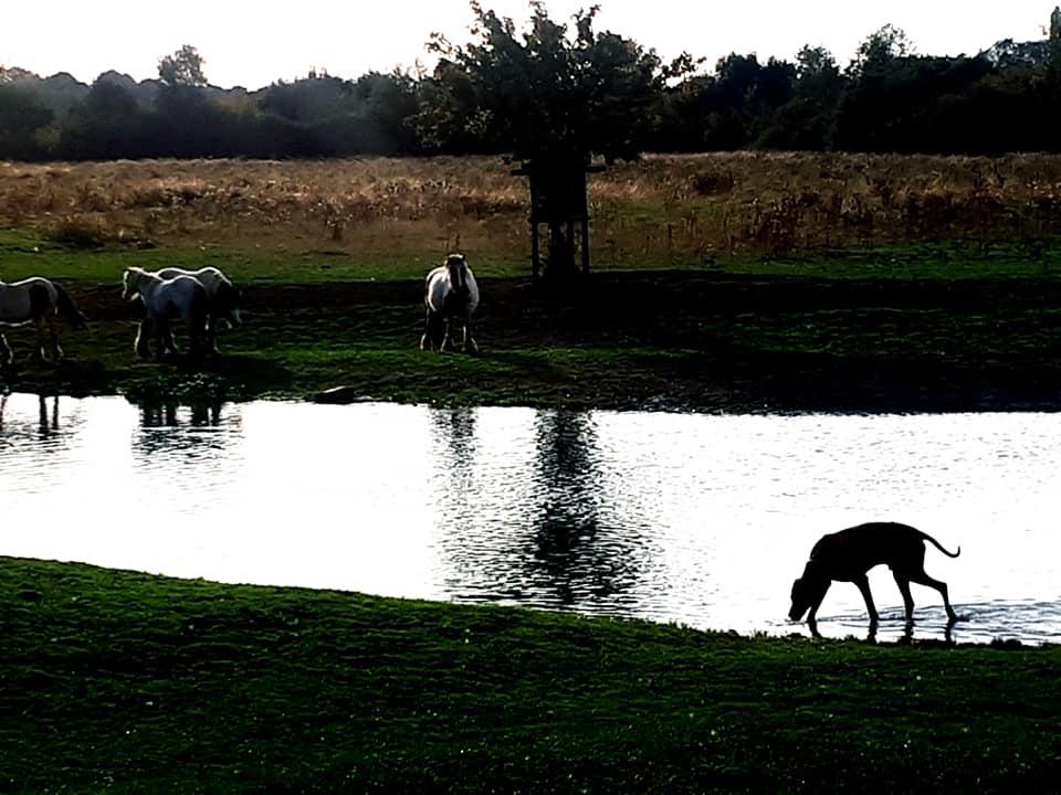 raffi-and-horses.jpg