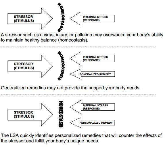 lymbic stress assessment.png