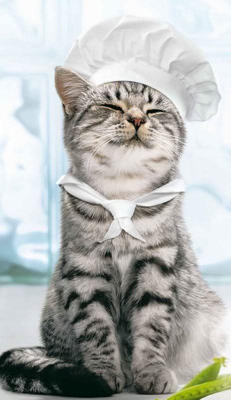 cat-chef.jpg
