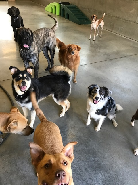 group-of-dogs-in-clubhouse.JPG