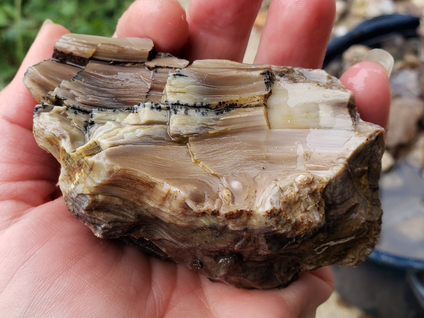 Dendritic Petrified Wood, an older Juniper Tree.