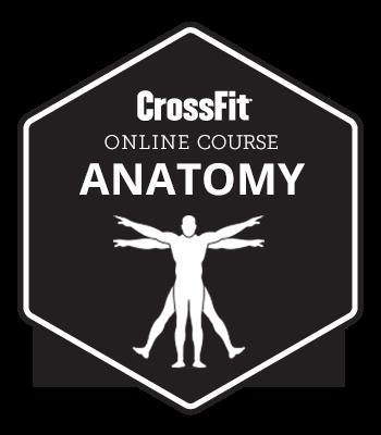 crossfit-anatomy