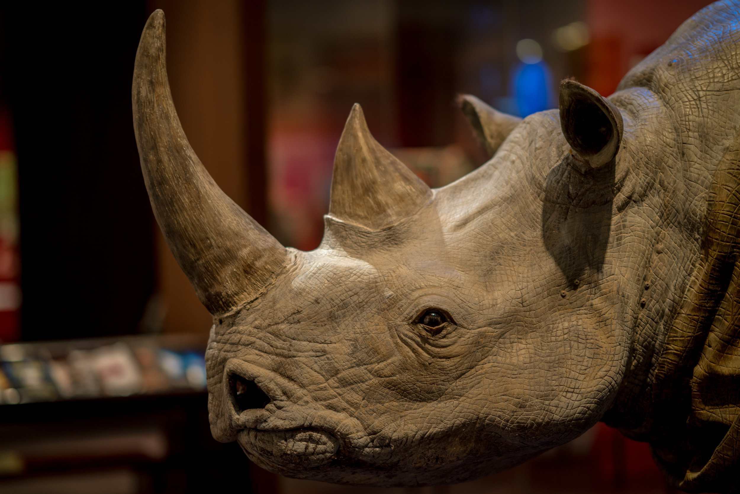 Rhino  85mm, f1.4, 1/10 iso 100, yes these settings are ridiculous and its not particularly sharp.