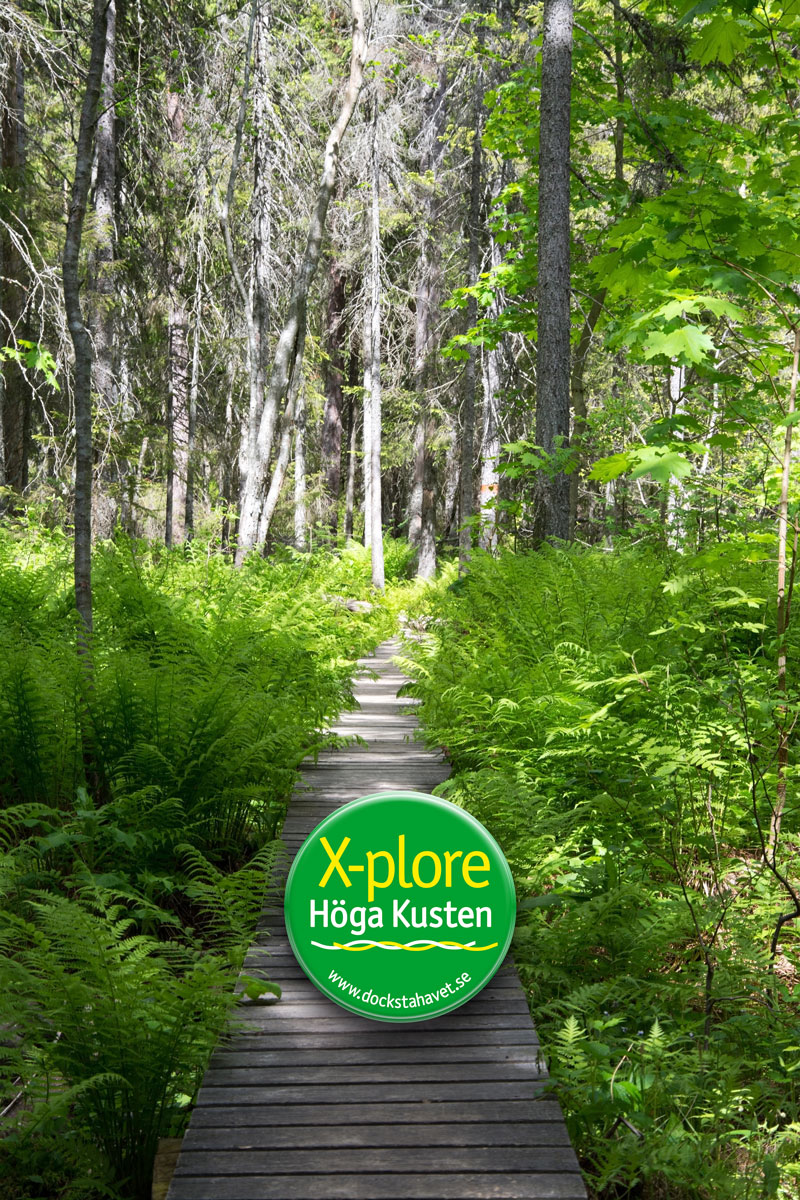 Explore the Skuleskogen National Park sailing the High Coast in Sweden