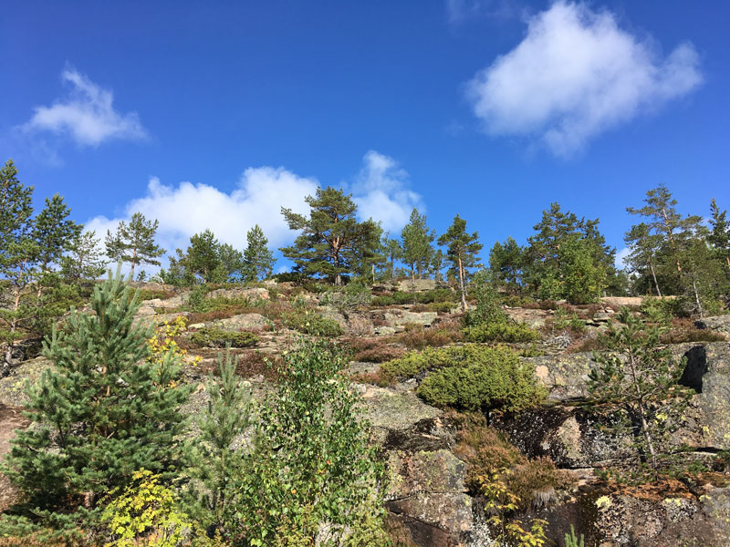 skuleberget-hoga-kusten-stigen-8.jpg