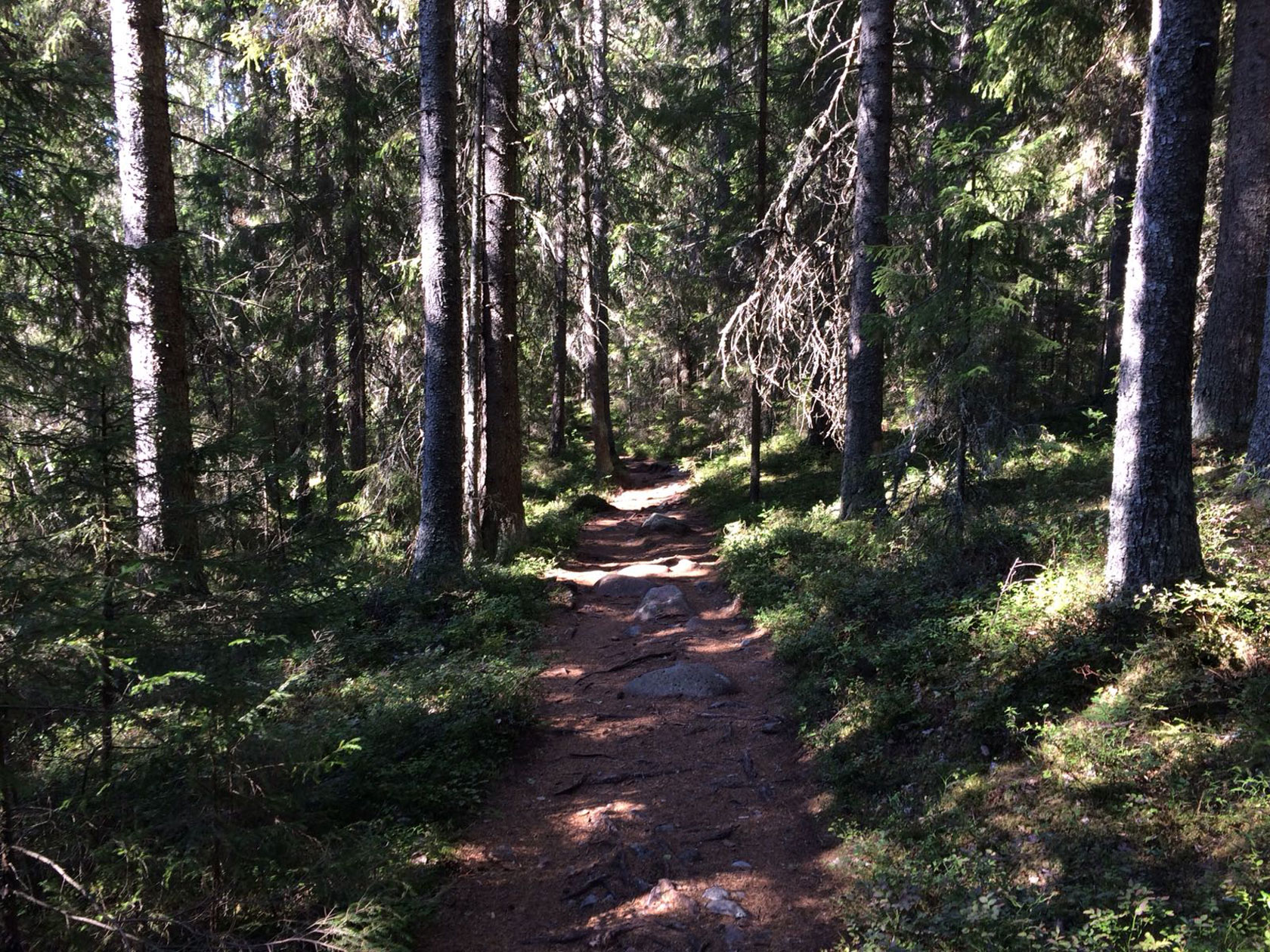 Hiking the natural paths into the Skuleskogen forest