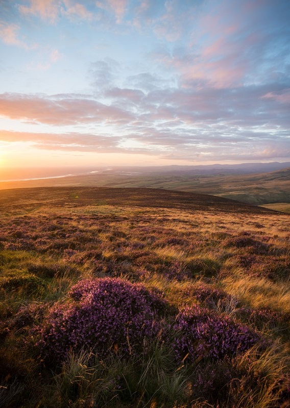 The heather season pretty much marks the start of my return to inspiration. From here on it's all uphill until the following May!