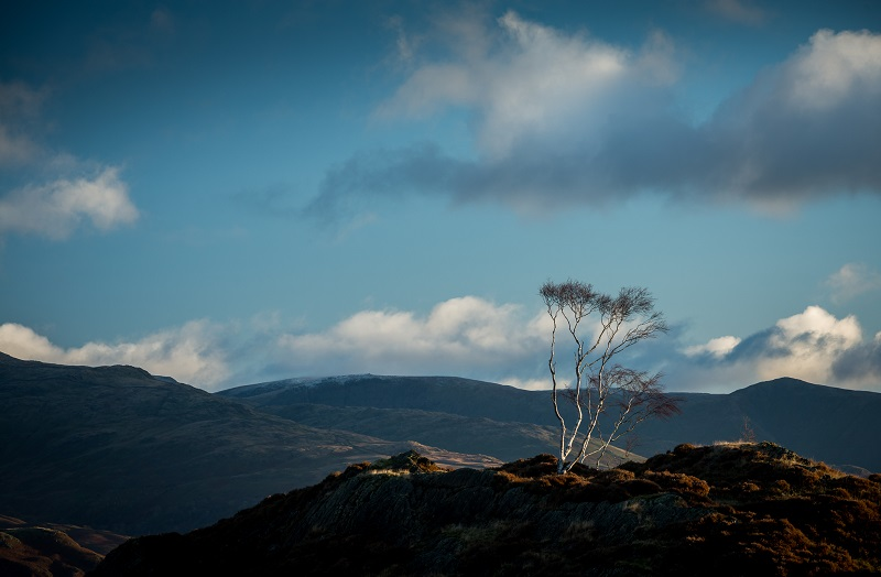 Early morning light perfectly hitting this elegant gathering of silver birches on Holme Fell.