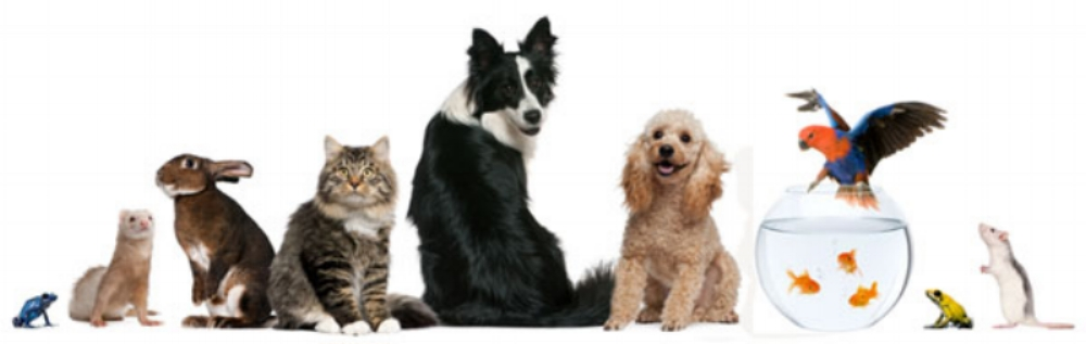 We're not just for cats and dogs - we love and care for pets of all persuasions! Simply ask us and we will respond with customized rates for any individual or combination of animals in your household! We are experienced with felines and canines, and also rabbits, guinea pigs, ferrets, chinchillas, mice, rats, birds, snakes, turtles, and freshwater or saltwater aquarium care!
