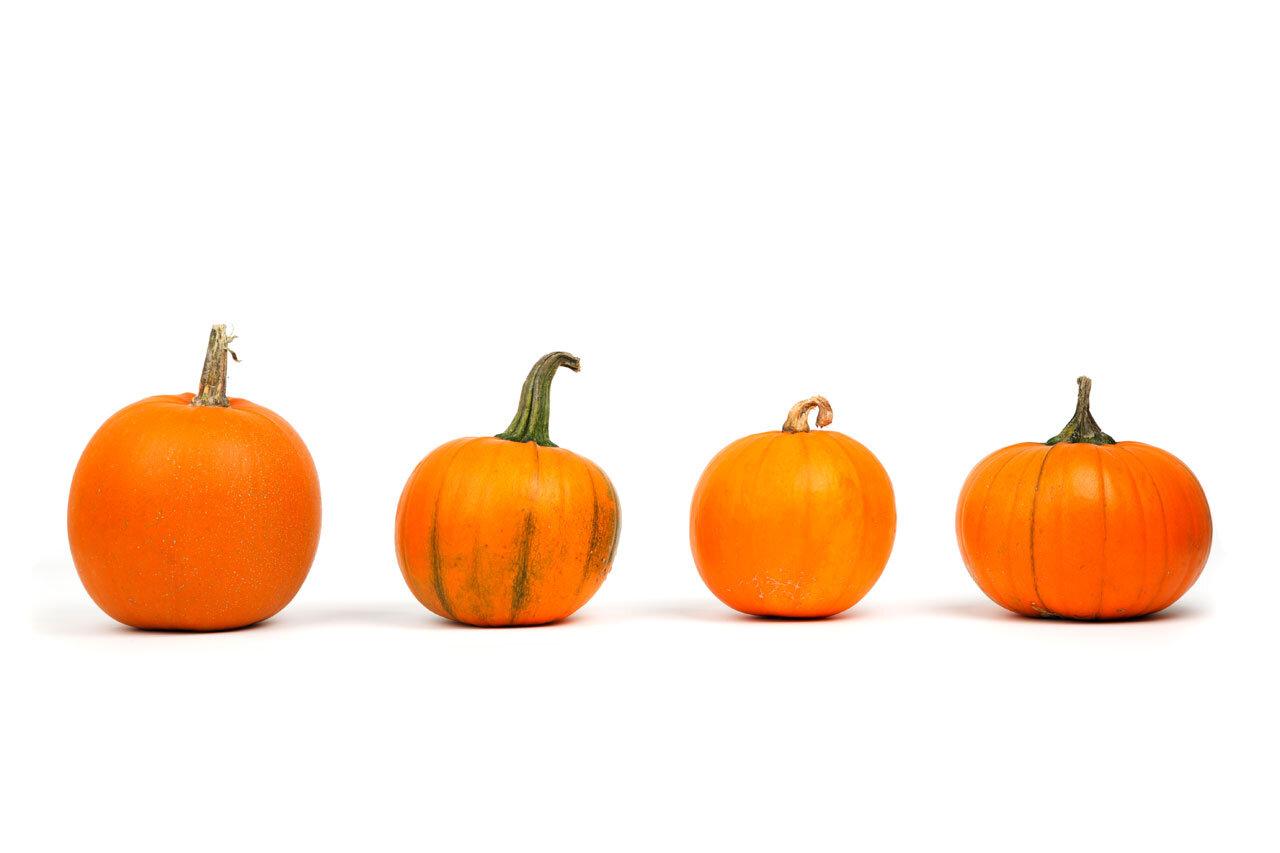 pumpkins-row.jpg