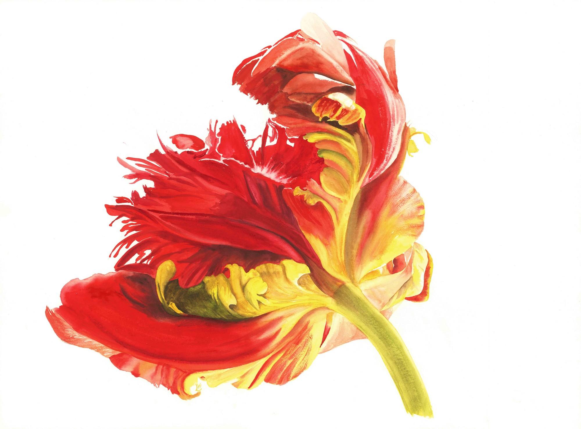 Parrot Tulip, 2015