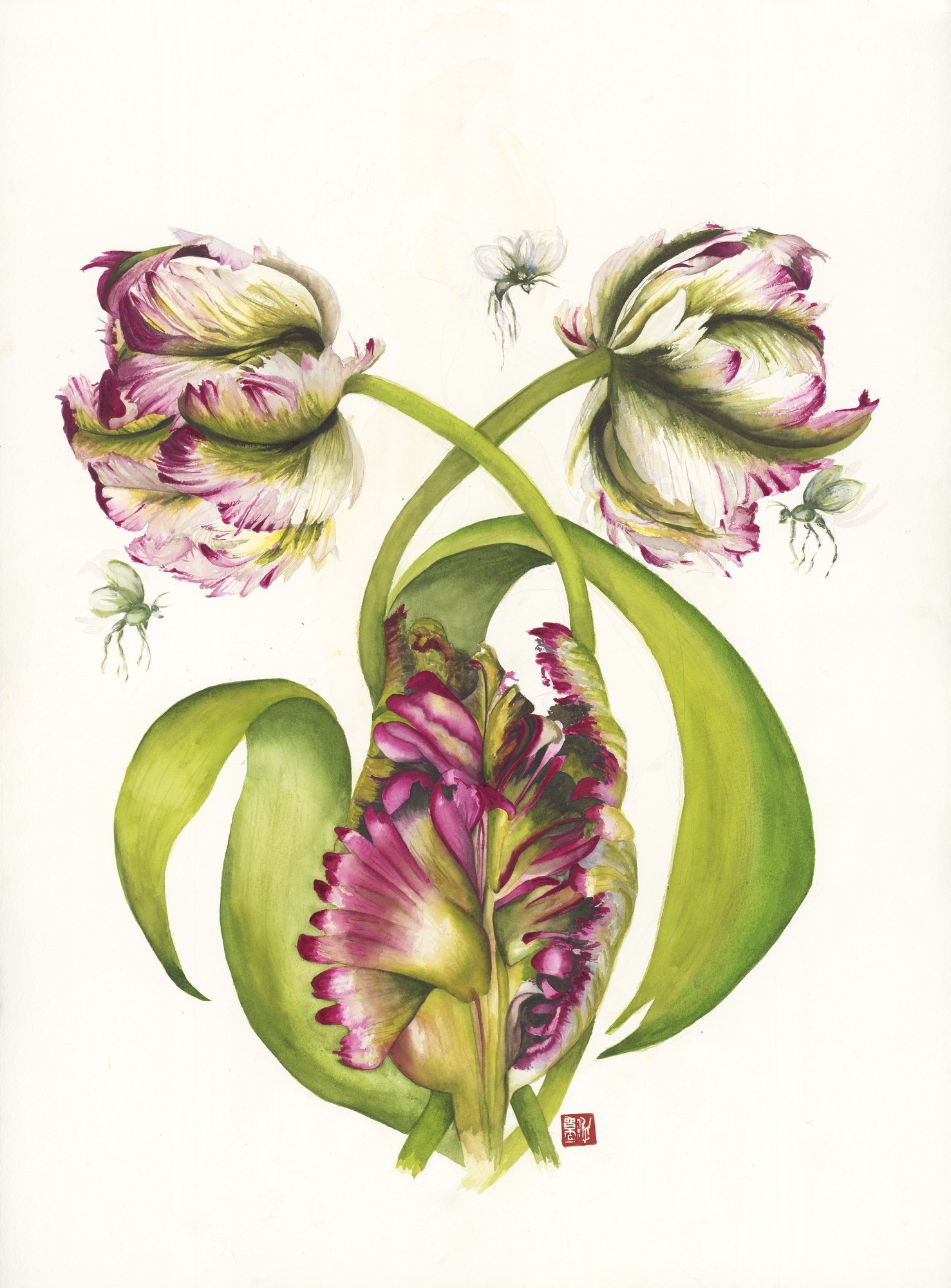 Lorna and Victor's Parrot Tulips, 2014