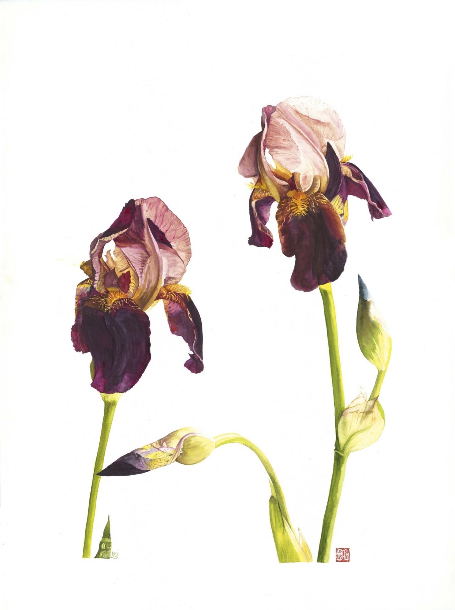 Iris with Bud, 2013