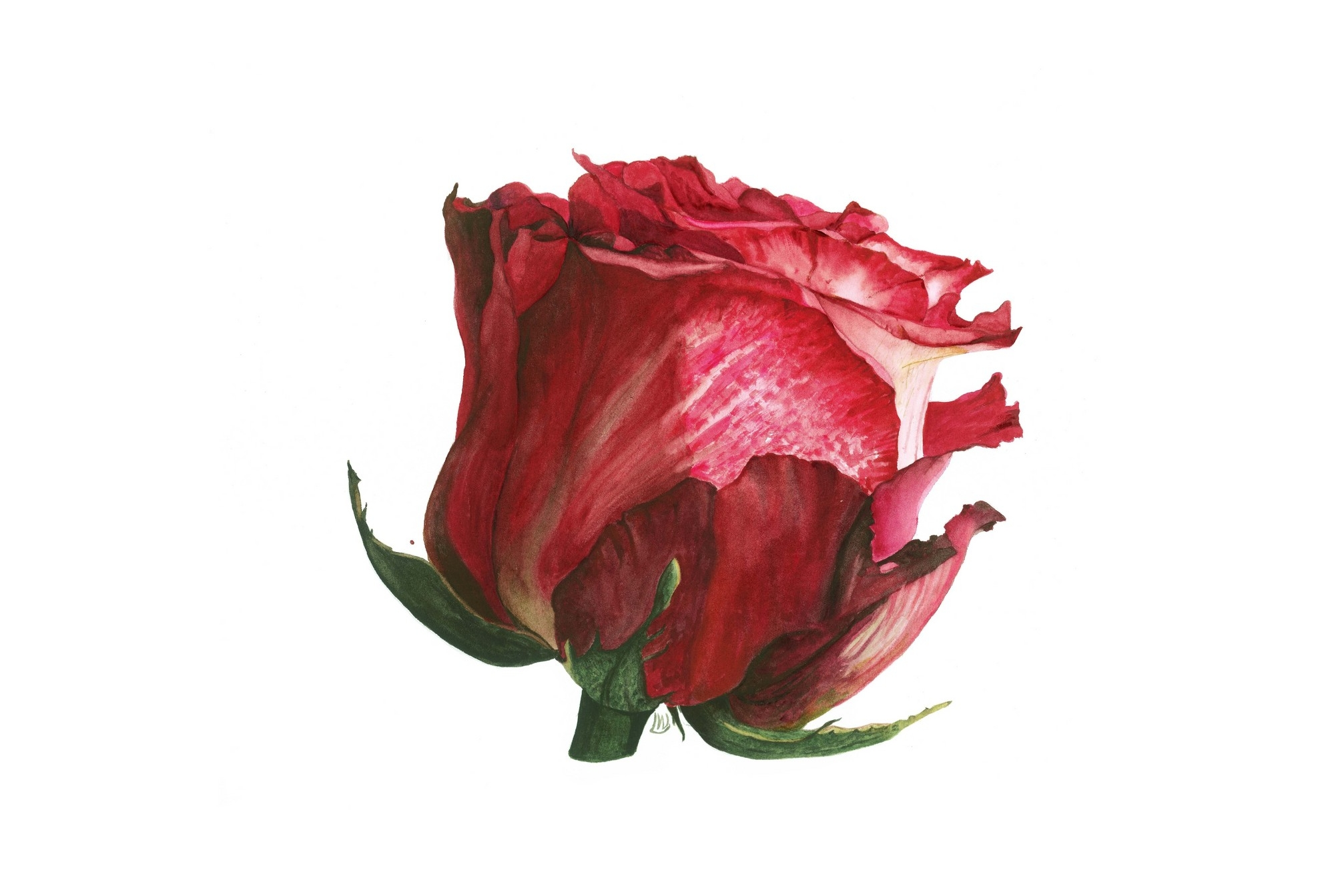 Red Rose Two, 2014