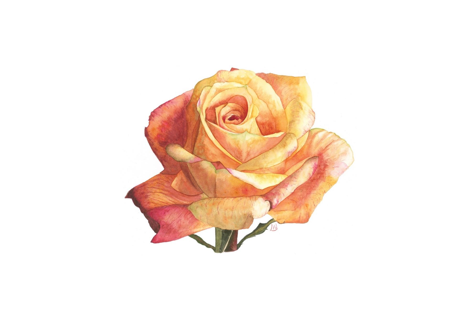 Yellow Rose, 2013