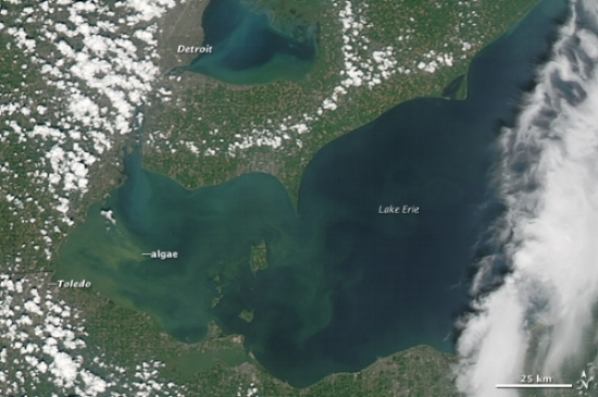 Blue green algal blooms in Lake Erie as captured by the   Moderate Resolution Imaging Spectroradiometer  (MODIS) on NASA's   Aqua  satellite.  Source: earthobservatory.nasa.gov