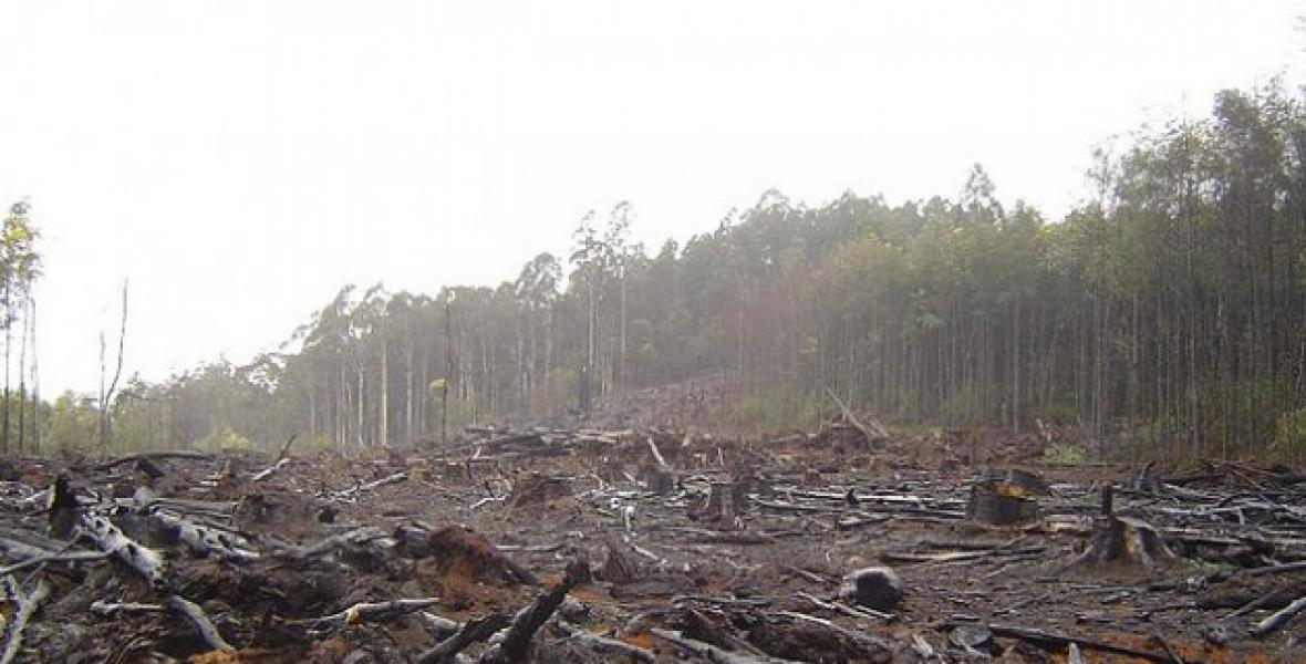 A lot of the world's last pristine forest land is being lost, and much of it is in Canada.   Source:  Rabble.ca