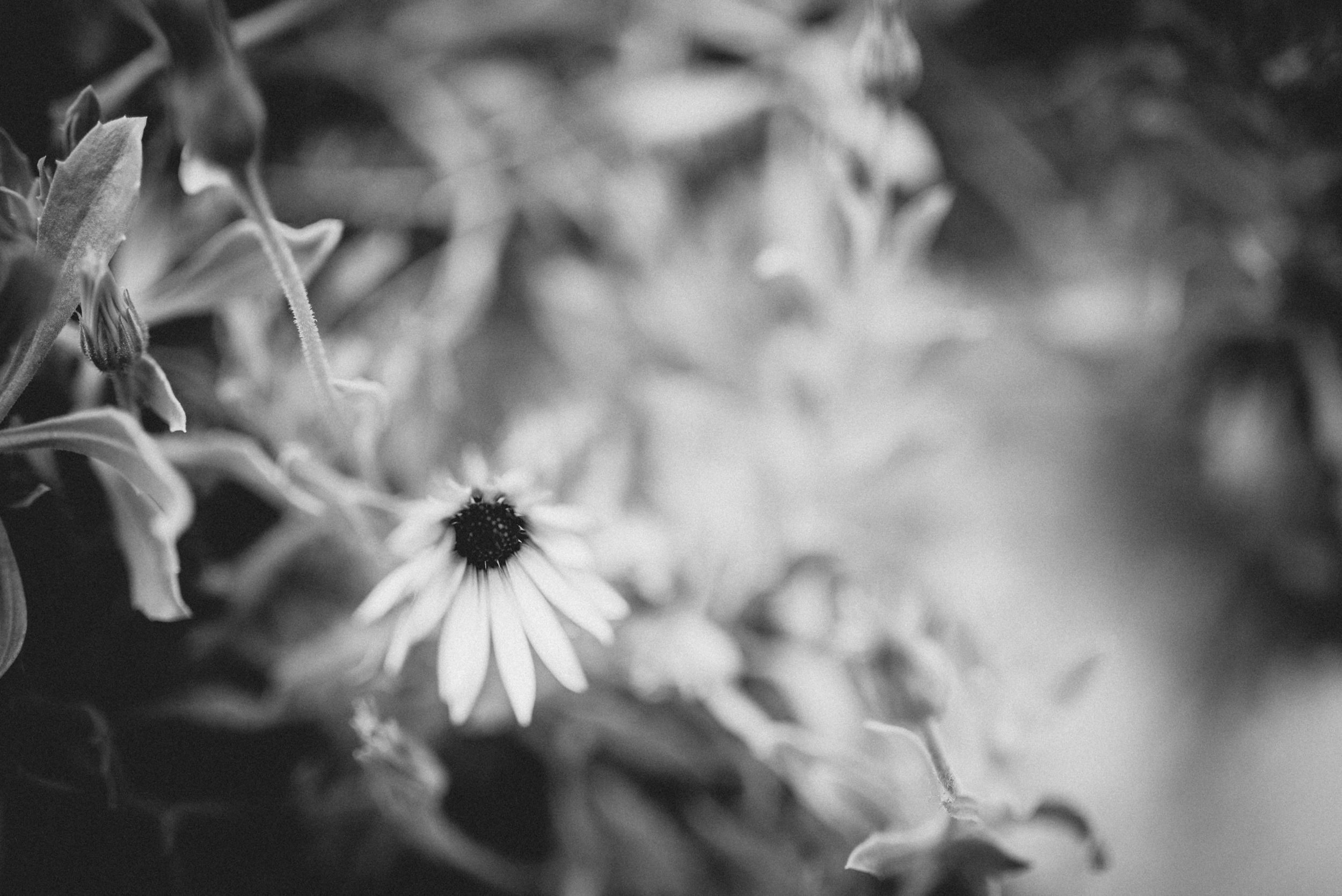 Portugal-Miss Freckles Photography-28.jpg