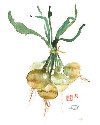 Lucile Prache - Onion