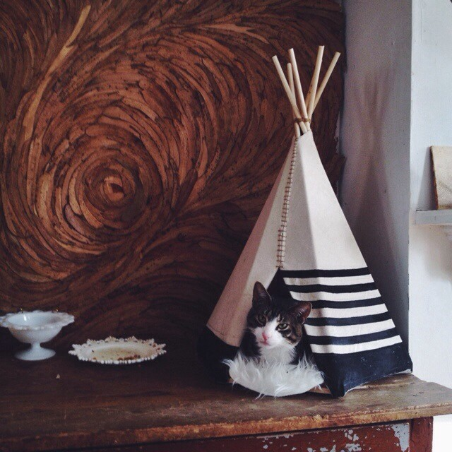 Ariele Alasko - teepee for cat and a leaf wall behind