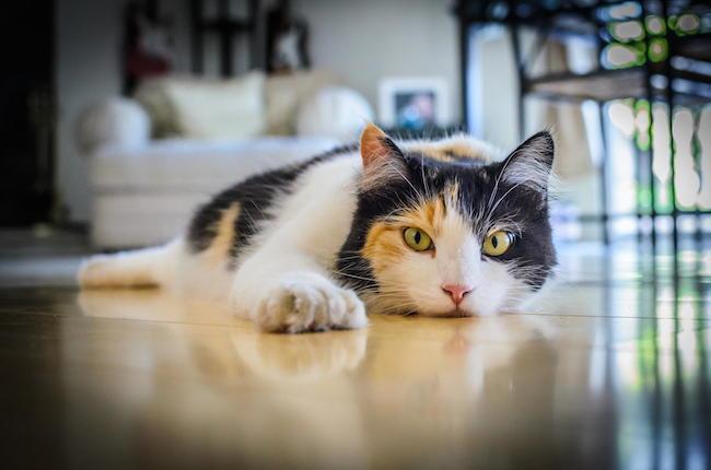 cat-reflection.jpg