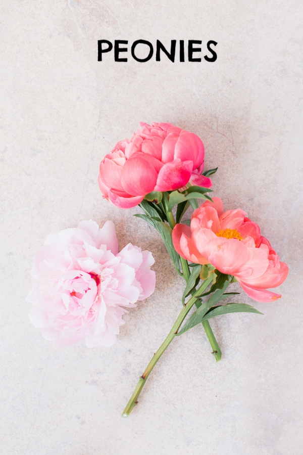 pink peonies-1.jpg