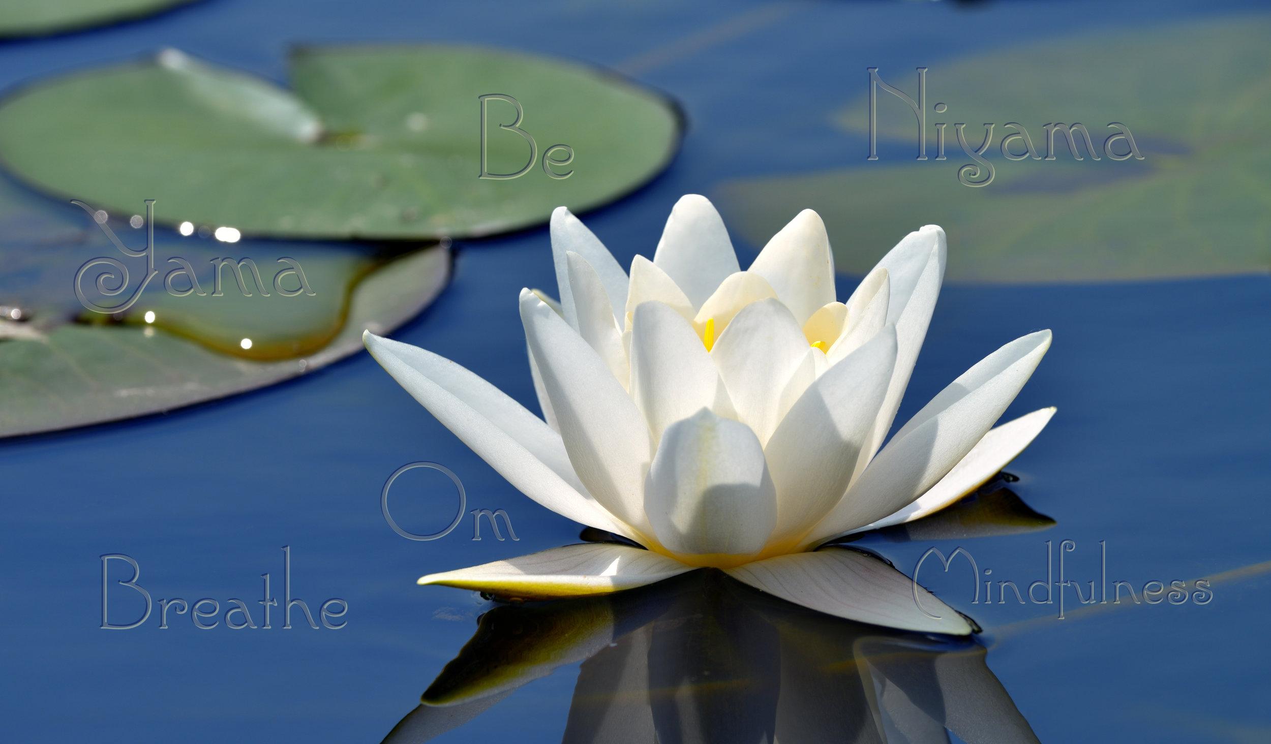 Breathe, Be, Om… Welcome to Tammy Flinn Yoga