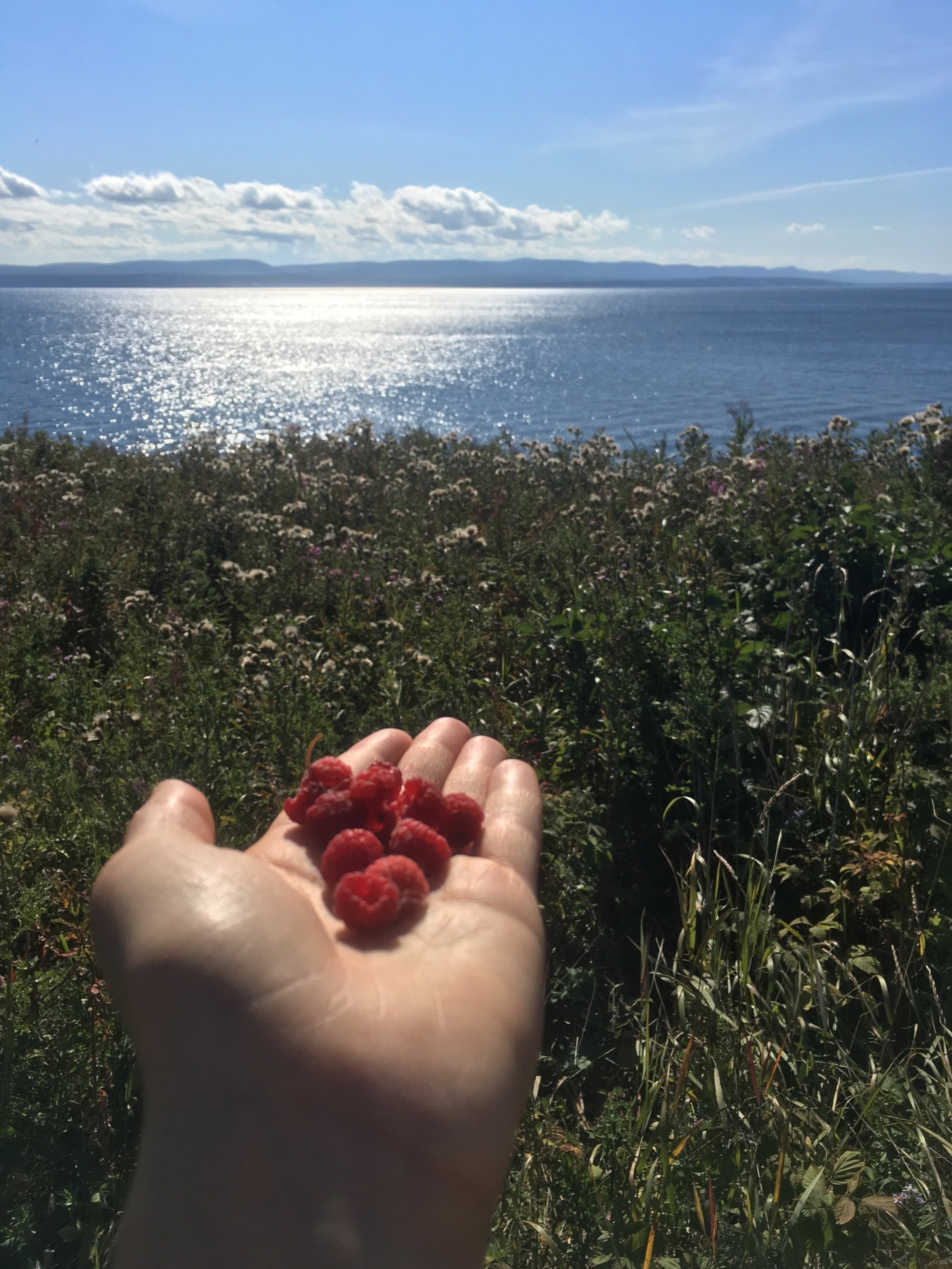You Can Pick Raspberries In Forillon! Yum!