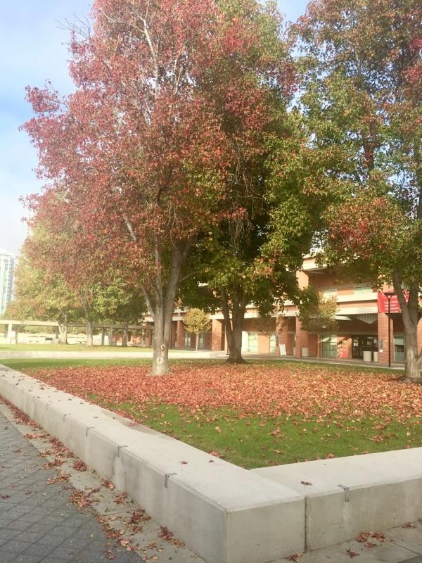 City College (2).jpg