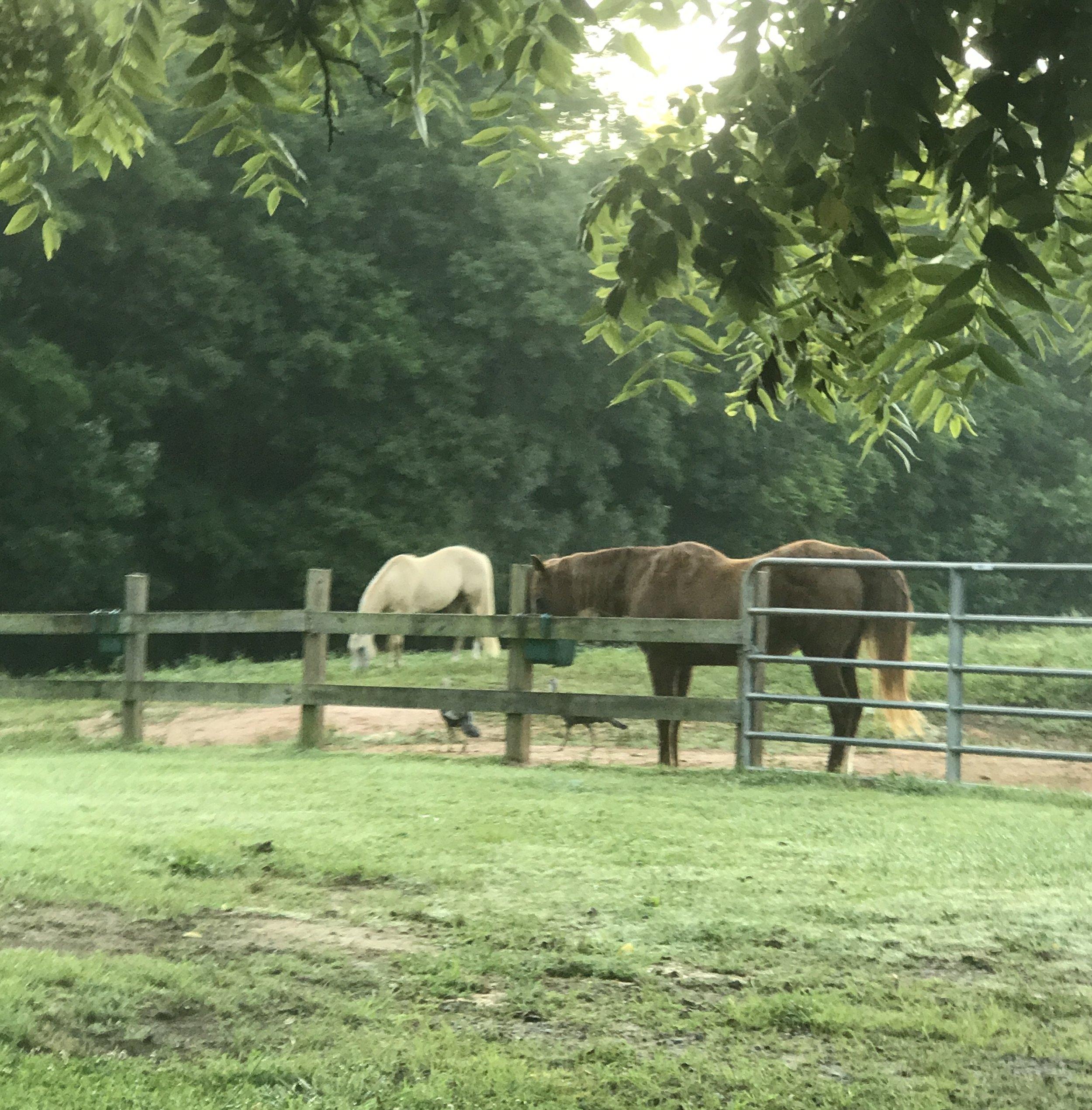Happy farm horses