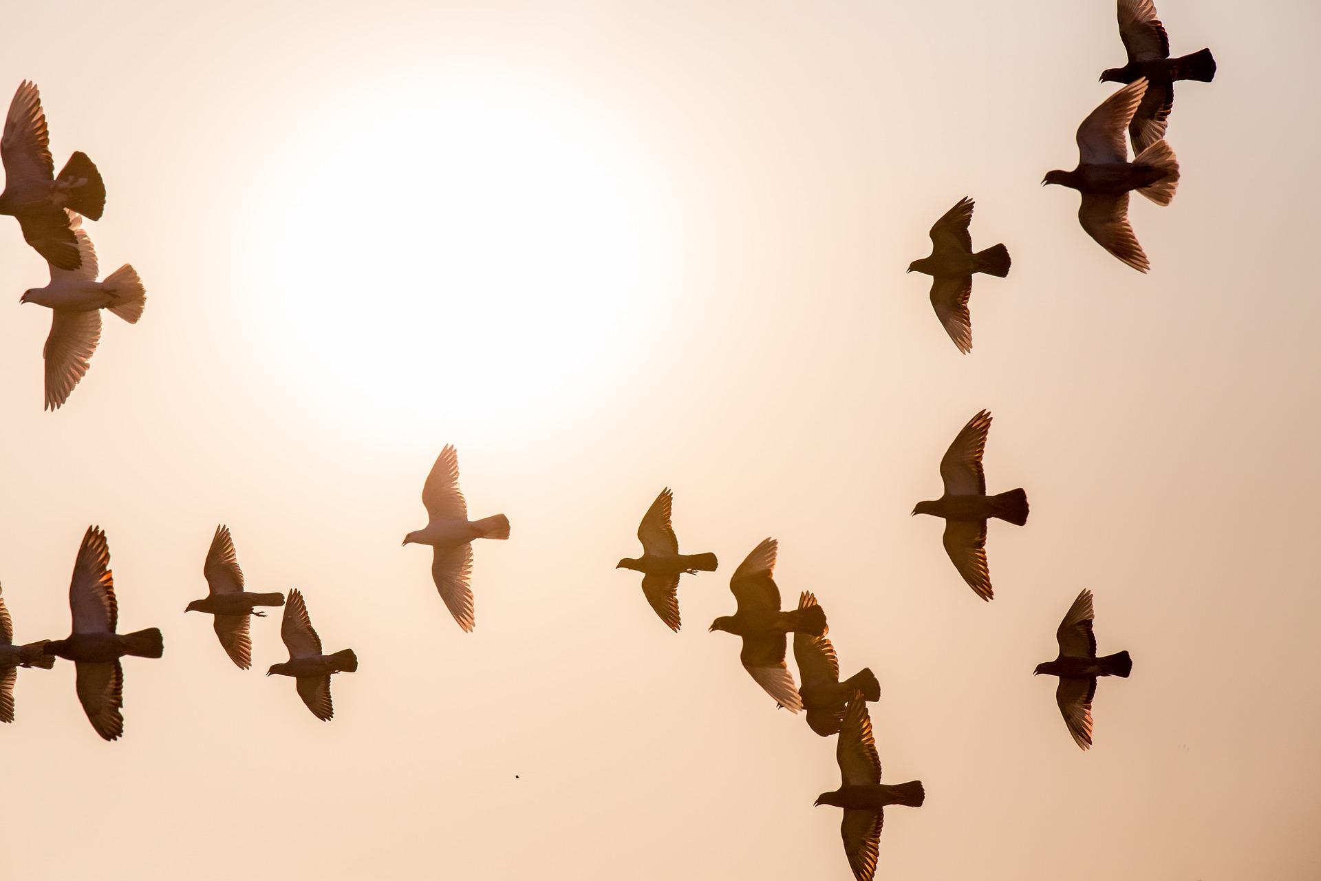 doves-1770573_1920.jpg