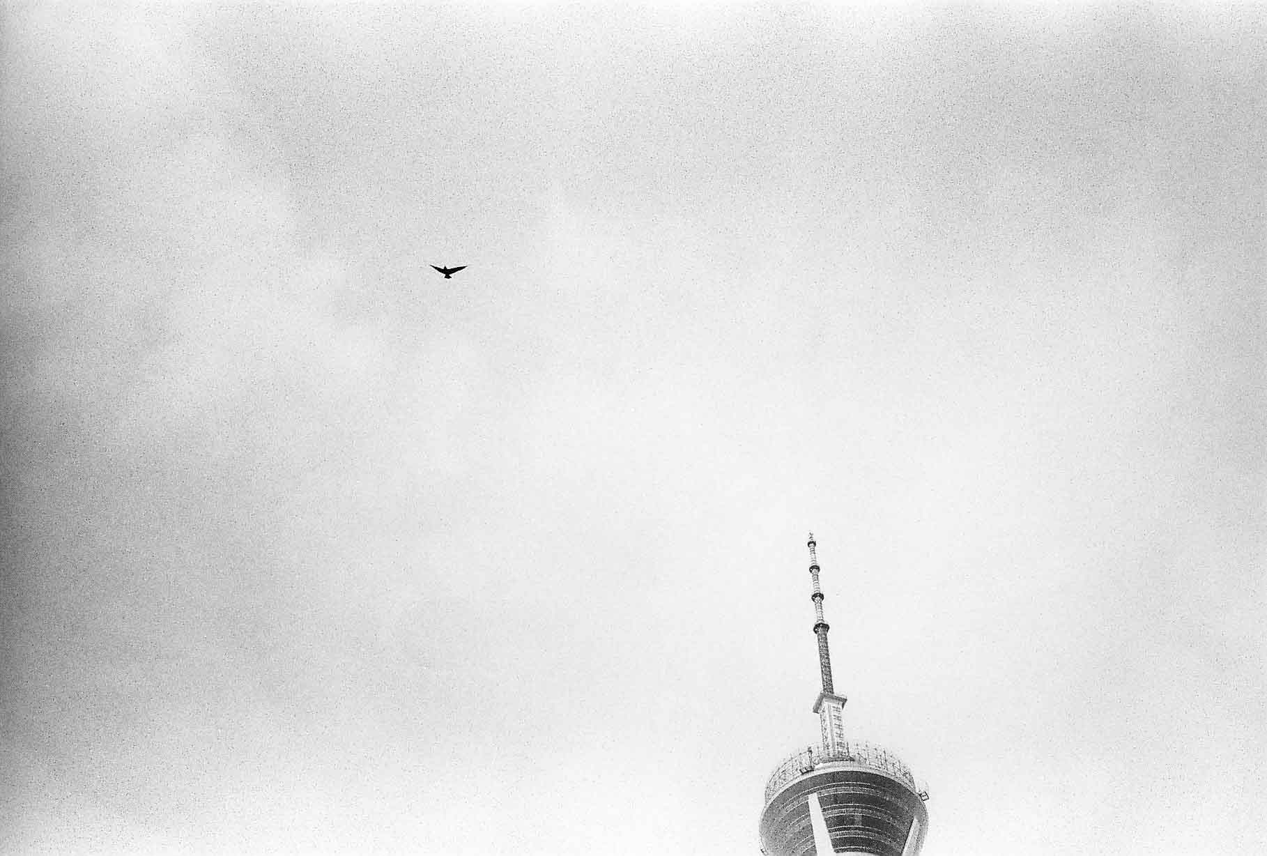 Television Tower and Bird. Chengdu, 2018.
