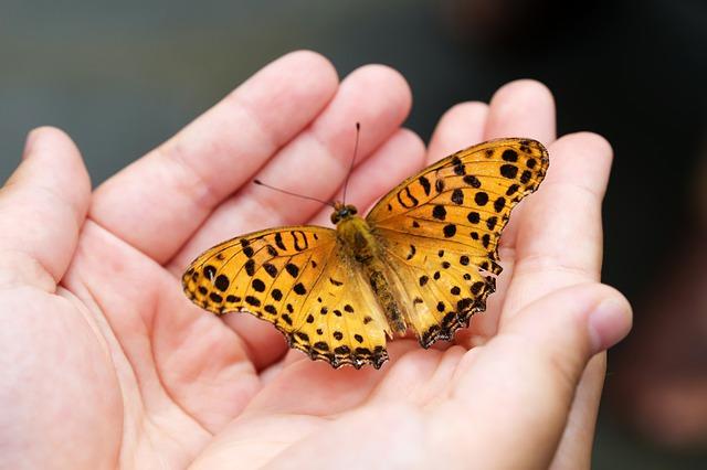 butterfly-4396444_640.jpg
