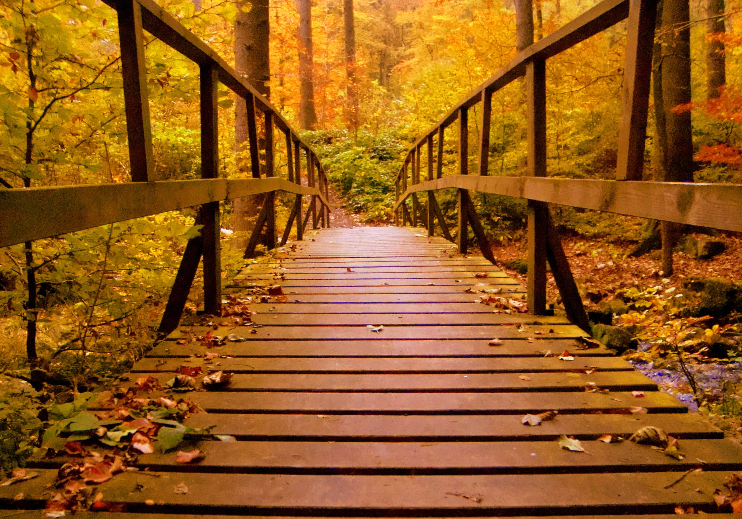 autumn-autumn-leaves-bridge-638481.jpg