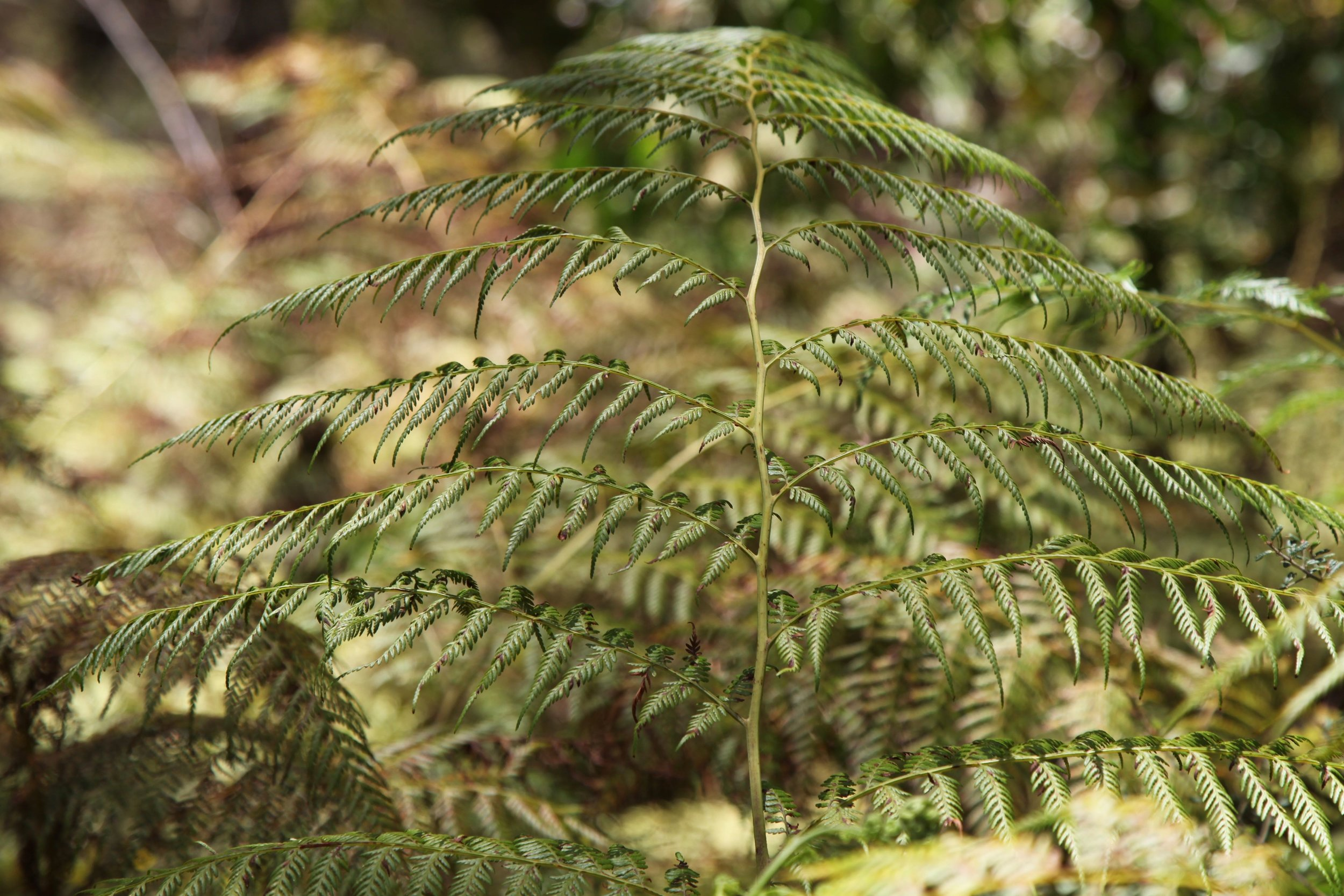 more-fern-blackheath.jpg