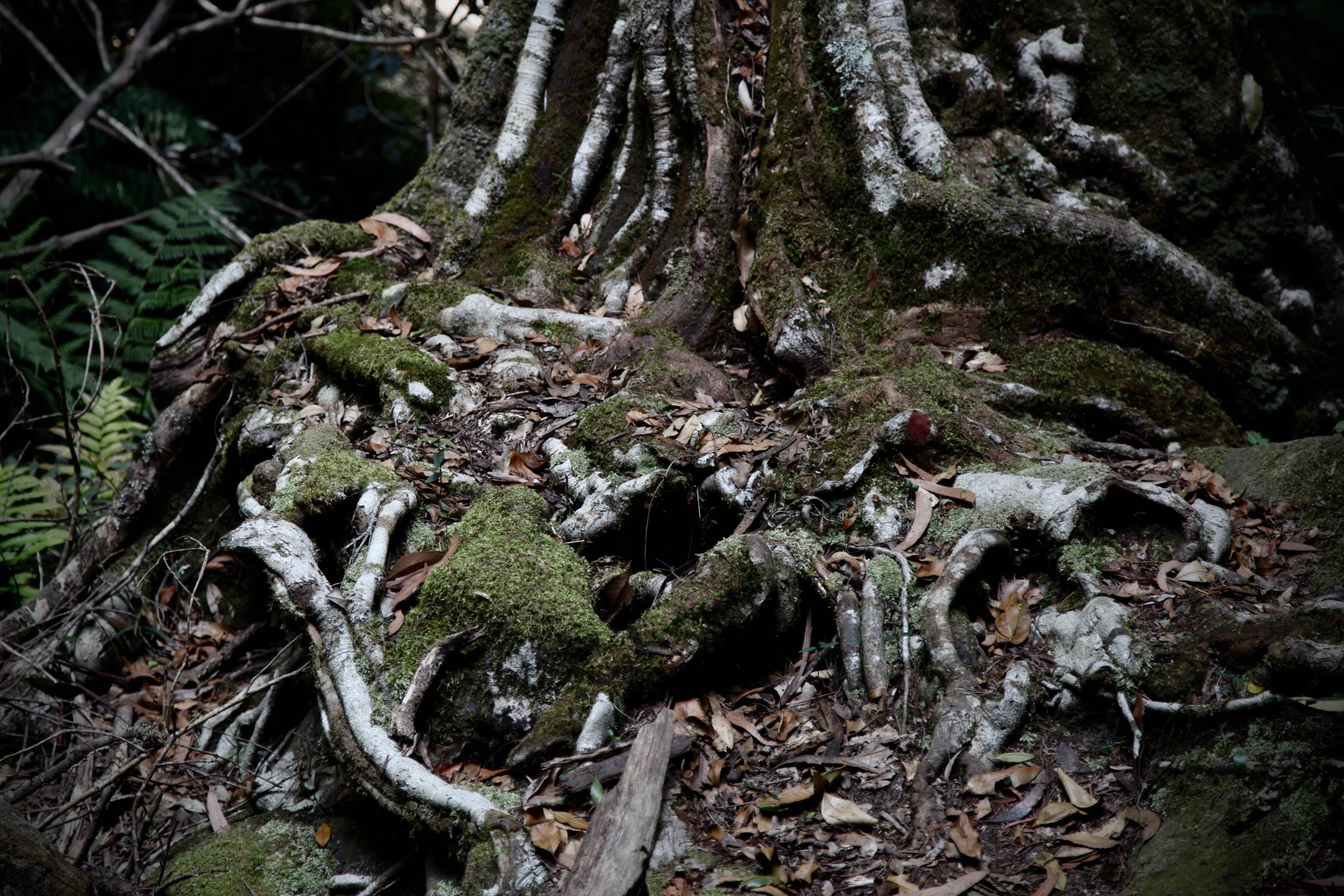 tree-roots-moss.jpg