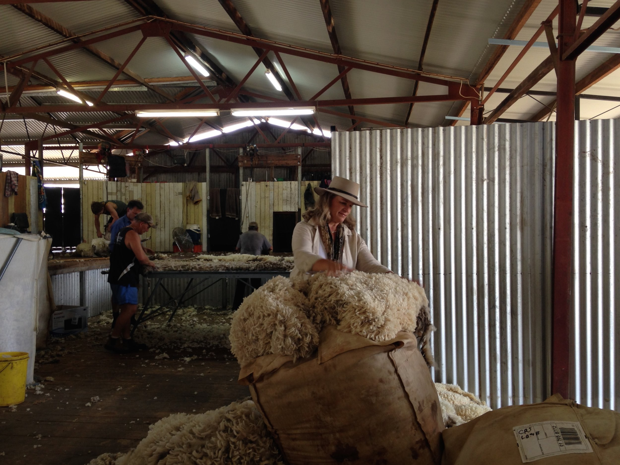 Inside the shearing shed.