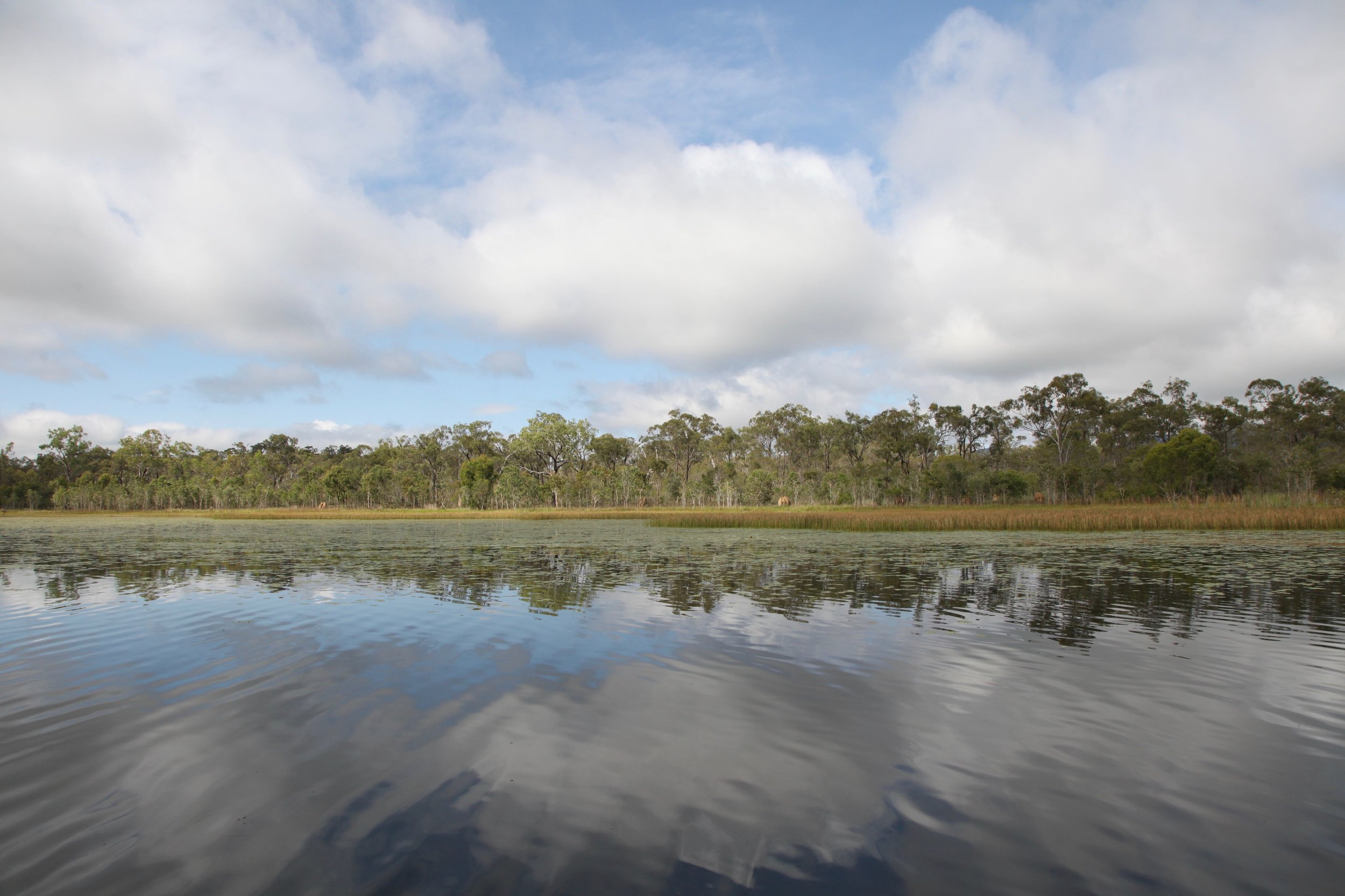 Mareeba Wetlands in far north Queensland is about 80km west of Cairns.