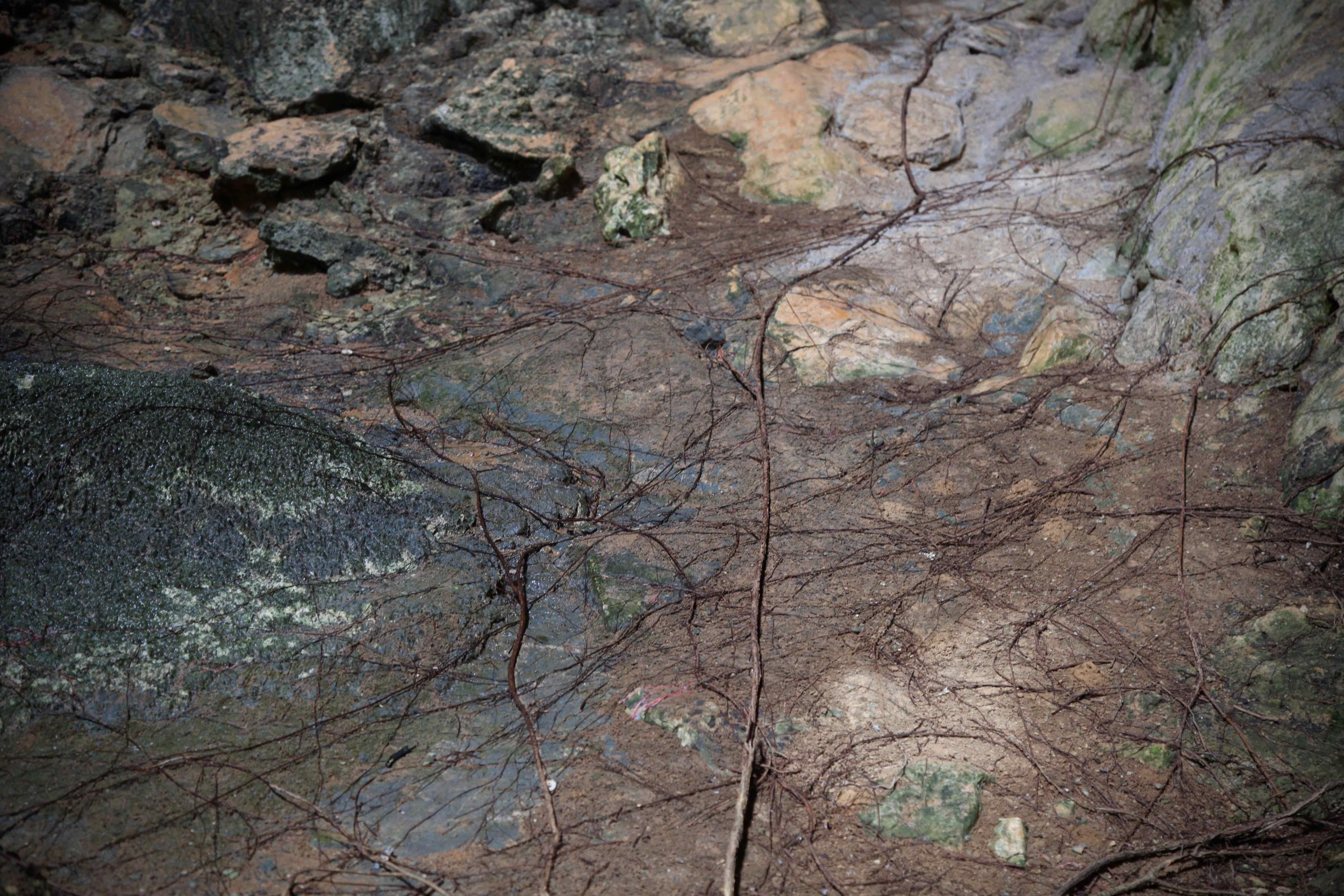 Here's a closer look at the tree roots inside of Royal Arch cave in the national park at Chillagoe.
