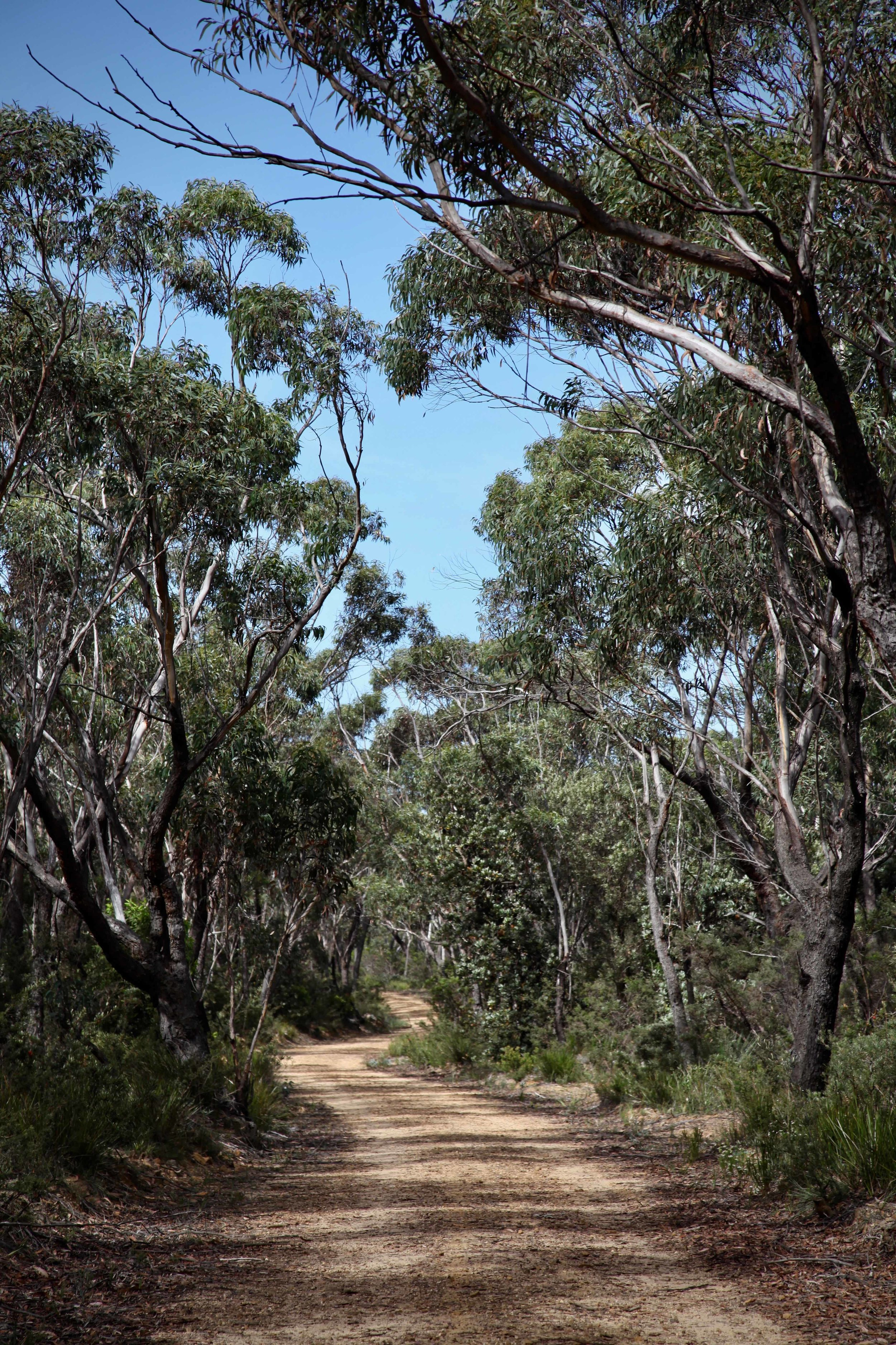 Narrow Neck trail at Katoomba in the Blue Mountains.