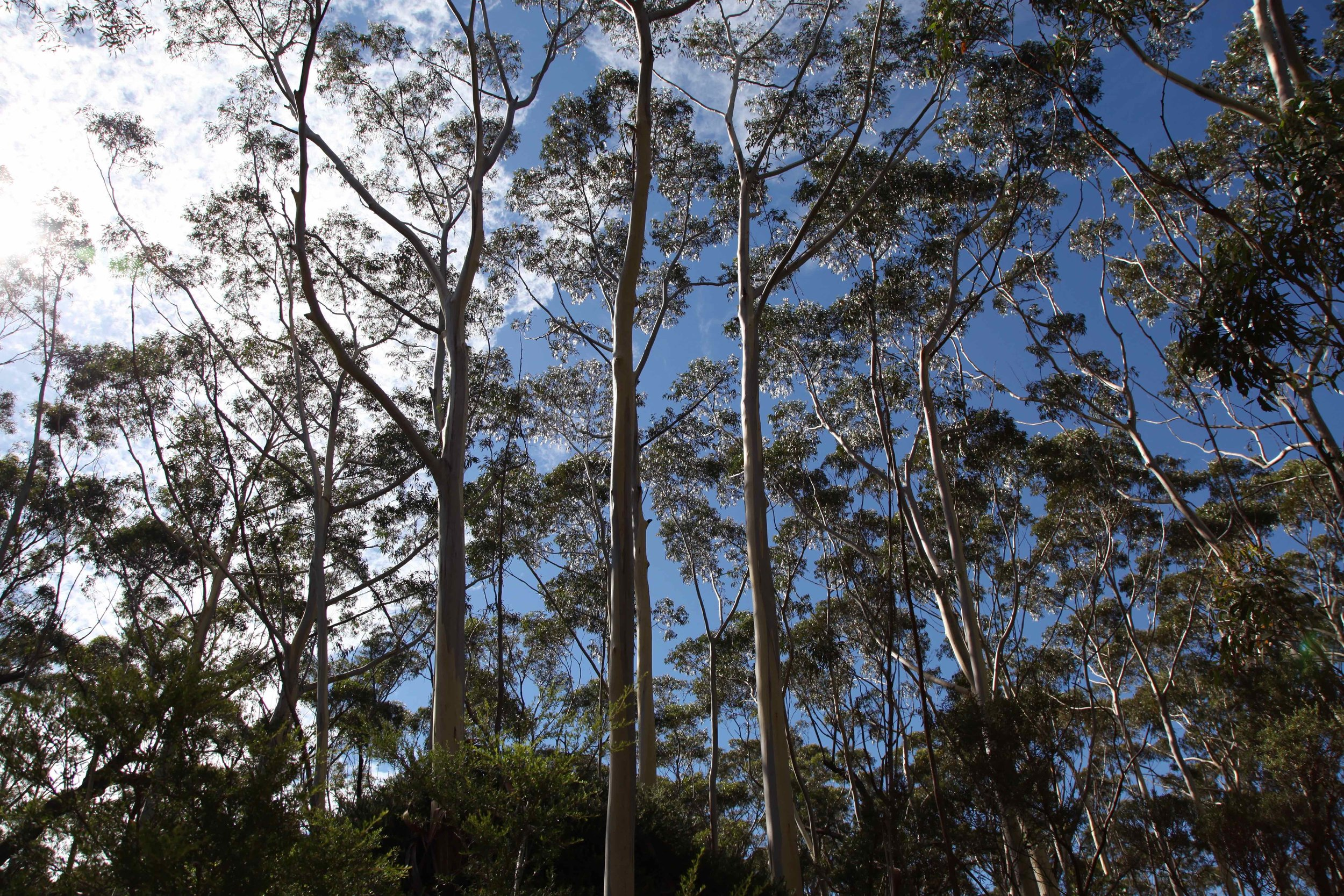Narrow Neck is a plateau so the majority of the walk is quite exposed — it's a good idea to take a full brim hat, plenty of water, and sunscreen... and enjoy the shady parts of the trail when you reach them.