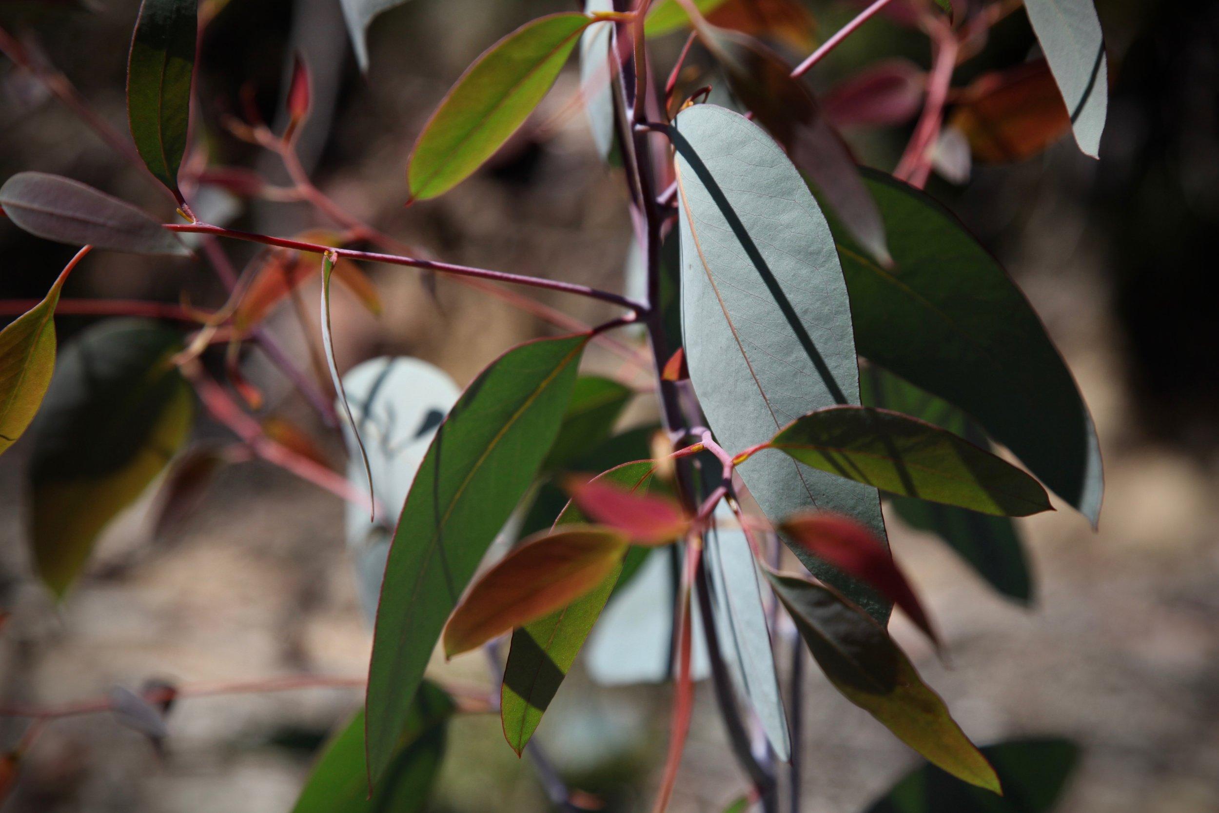 narrow-neck-leafs.jpg