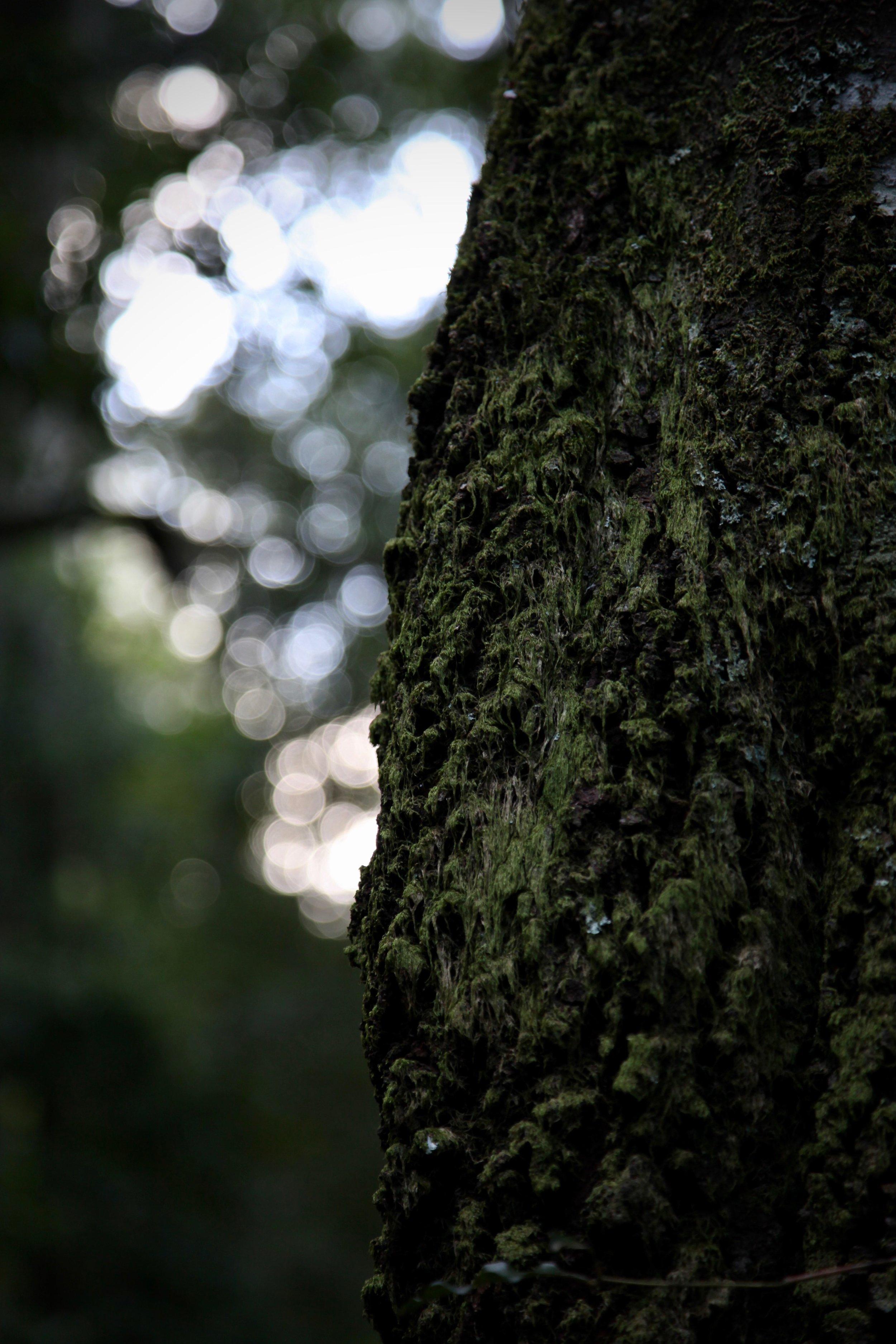 leura-forest-light.jpg